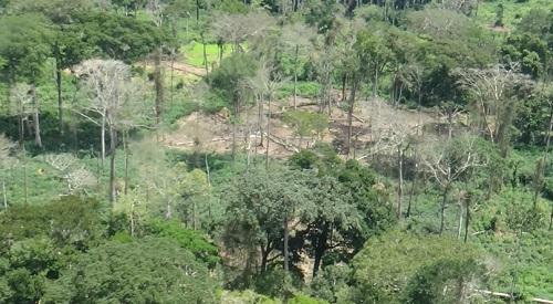 アフリカの熱帯雨林