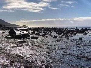 重油で汚染された海